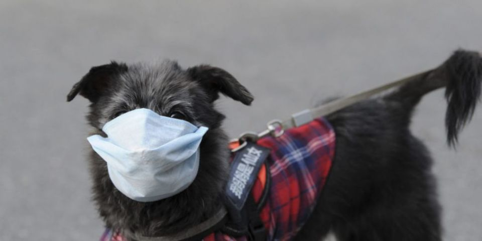Pet dog tests positive for COVID-19 in Hong Kong | Newstalk