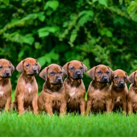 dogs-world-is-crazy-get-a-tiny-bit-or-freedom-to-walk-23