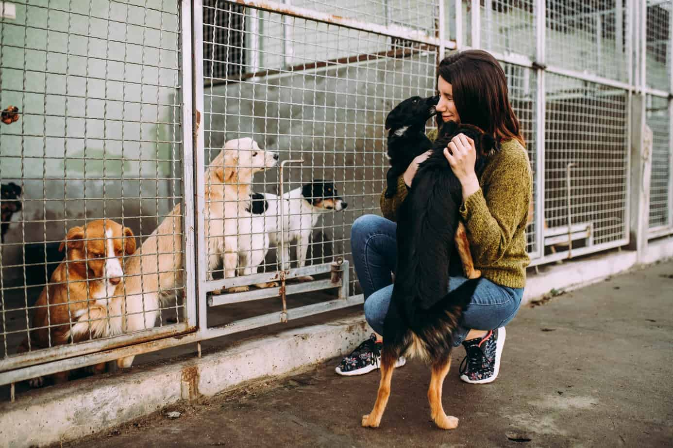adoption-experience-adopt-a-dog-from-a-uk-rescue-257