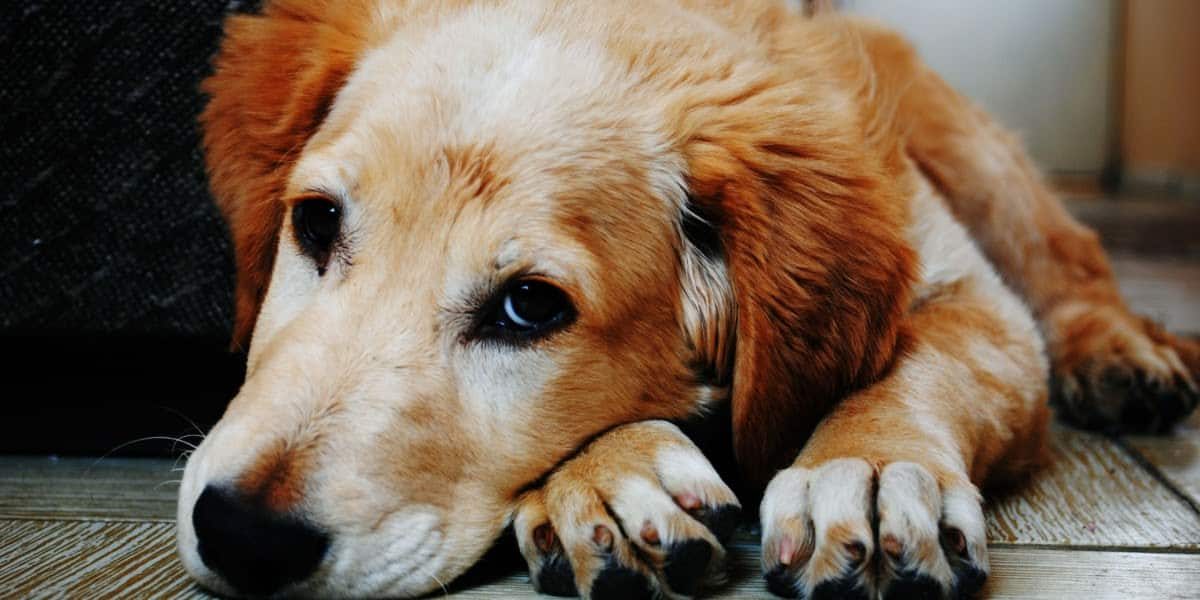 how-do-you-feel-when-you-look-at-your-dog-275